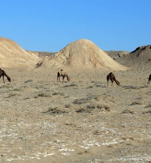 desert-photography-camel-life-3041069